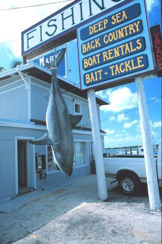 Shark Hanging Outside a Fishing Charter