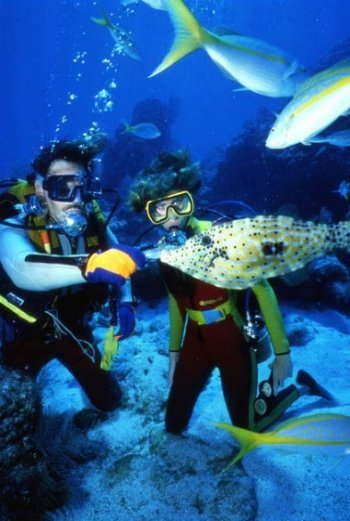 Scuba Divers Feeding Fish