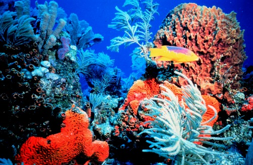 Wispy soft coral, brain coral and tropical fish