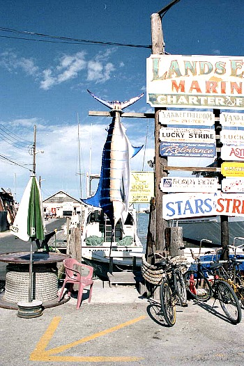 Blue marlin caught on a Key West fishing trip