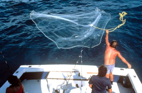 Wahoo Fish And How To Catch This Fast Florida Keys Sport Fish