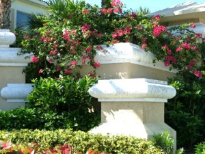 Brilliant bougainvillea provide splashes of color throughout Key West and Florida Keys