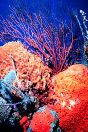 Brilliant Coral Reef