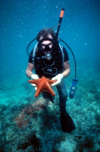Diver Holding Starfish at Alexander's Wreck