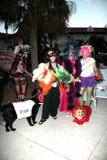 Dogs Dressed For Pet Masquerade