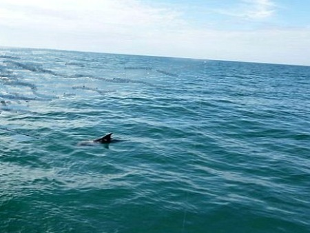 Eco Tour Dolphin Watch