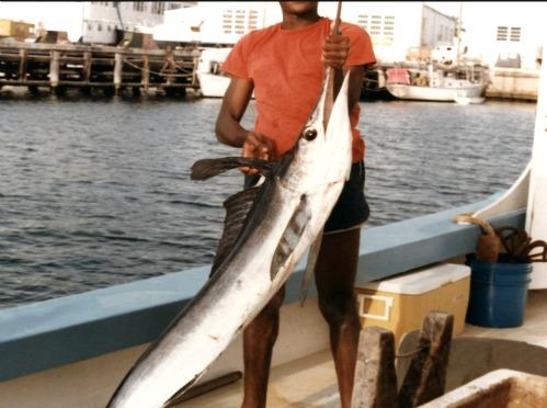 Landed Blue Marlin