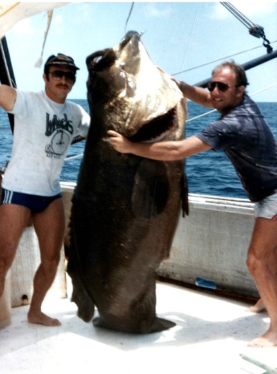 Goliath Grouper Are Massive Beasts