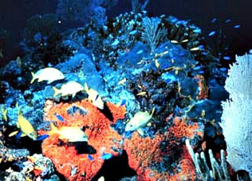 Coral Reefs are Home to Numerous Florida Fish