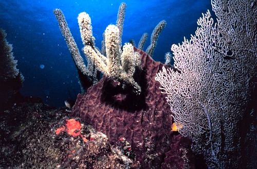 Sponges And Coral Live Together