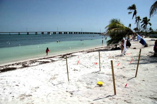Sea turtle nest marked off at Bahia Honda State Park