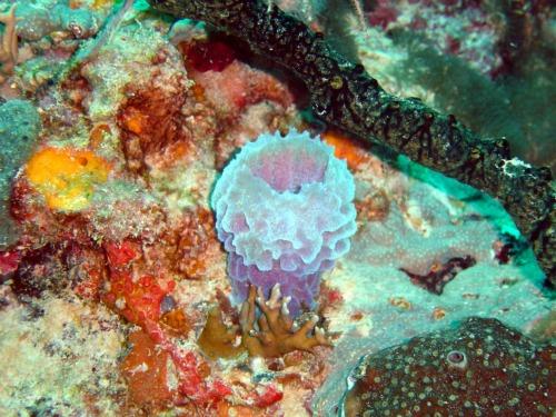 Sponge at Biscayne National Park