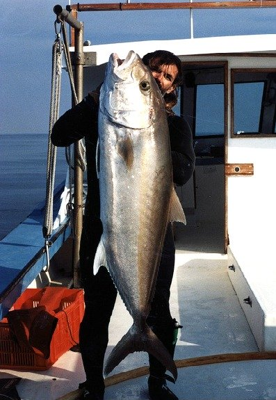 Greater Amberjack Hauled In
