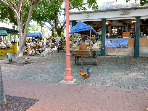 Bahama Village Kiosks and a local Key West rooster