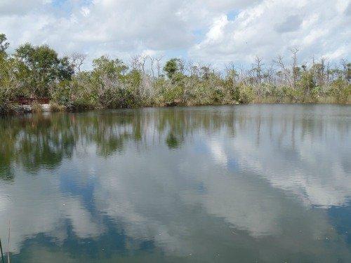 Blue Hole At National Key Deer Refuge
