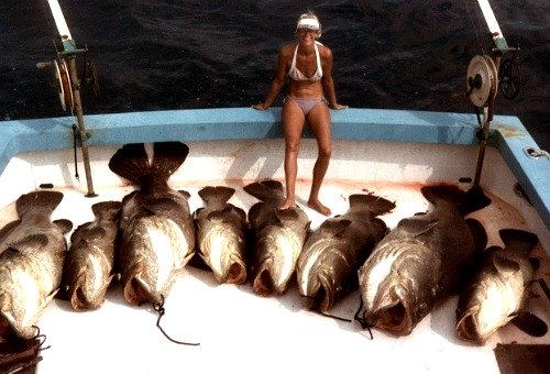 Boat Load of Goliath Grouper