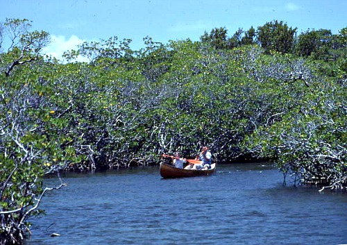 Canoeing Everglades National Park