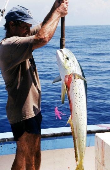 Florida Keys Dolphin Fishing