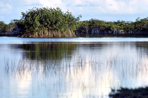 Everglades National Park Is Part Of Florida Bay