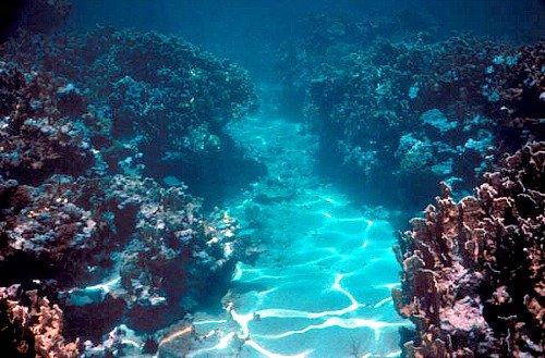 Finger Reef at Sand Key