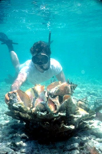 Snorkeling Florida Keys at Eastern Dry Rock and Hunting Conch