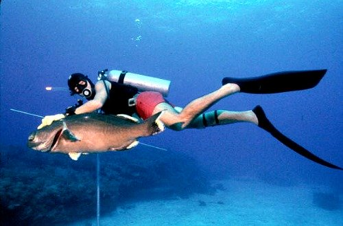 Spearfishing for grouper