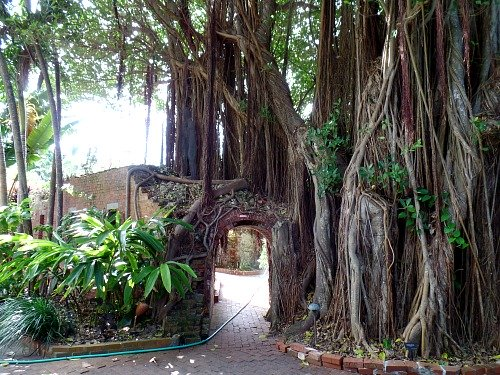 Gate formed out of a banyan tree at West Martello Tower, Key West FL