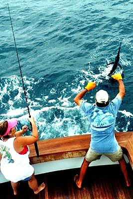 Sailfish being released while Florida Keys offshore fishing