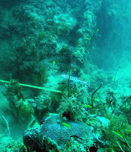 HMS Winchester Remains Being Examined by NOAA