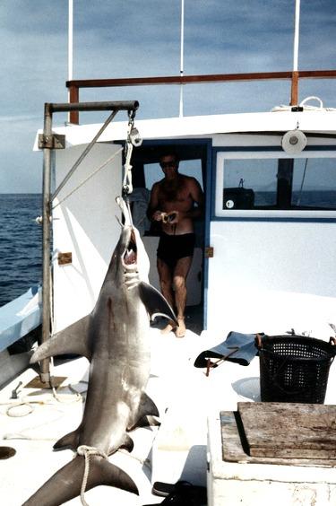Hanging Hammerhead Shark