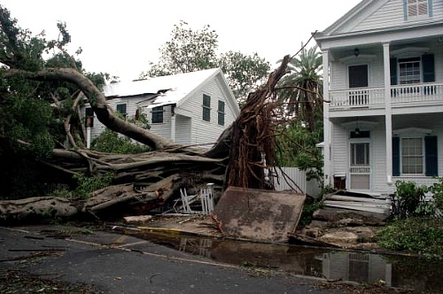 Trees Snap and Split Like Twigs During A Hurricane