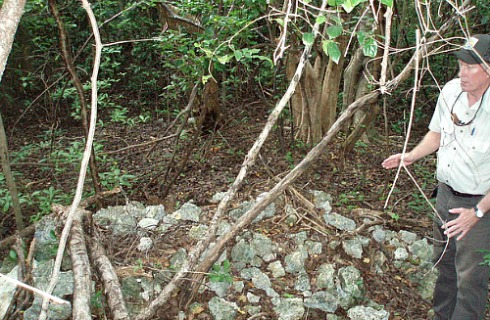 Key Largo Woodrat Nest at Crocodile Lake National Wildlife Refuge