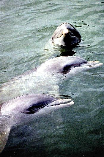 Key West Dolphin Adventure Tours