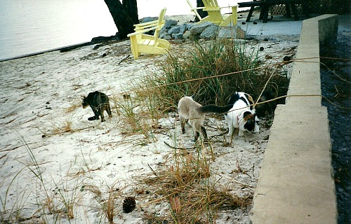 Kitties Enjoying Their Beach Time