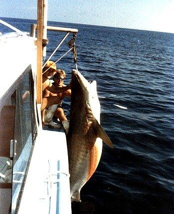 Lark Shark Hanging at Islamorada Hump