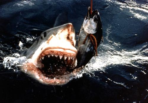 Large Angry Shark