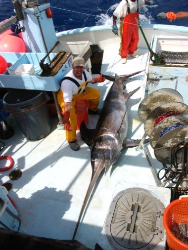 Large Swordfish Lying on Boat Deck