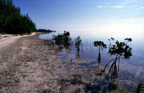 Long Key State Park Nature Walk Along Mangroves