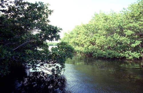 Mangrove Lined Channels at Marquesas Atoll