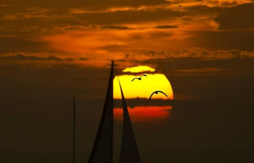 Sailboat Sails Against The Setting Key West Sun