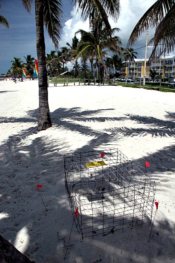 Protected Sea Turtle Nest on Smathers Beach, Key West FL