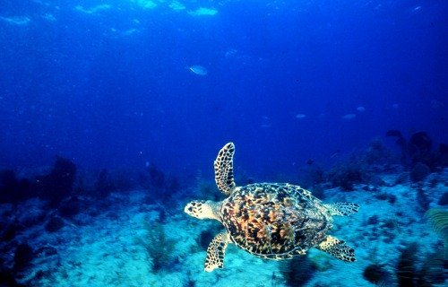 Sea Turtle at Turtle Reef