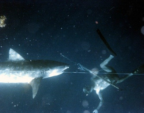 Shark and Spearfishing Diver