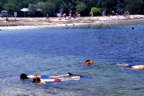 Snorkeling at John Pennekamp State Park
