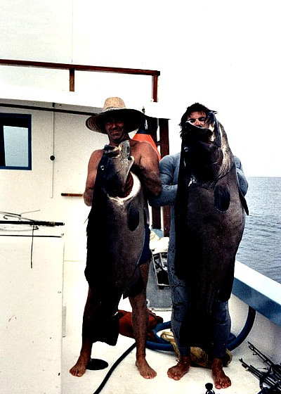 Two Hooked Black Grouper